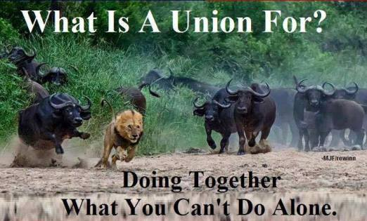 unionbulls