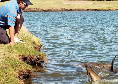 Golf Course Sharks