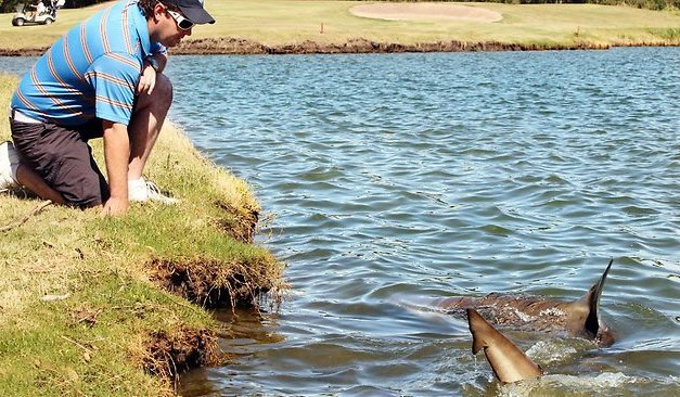 Forget Alligators, Golf Course in Australia Has Aggressive 10ft Bull Sharks