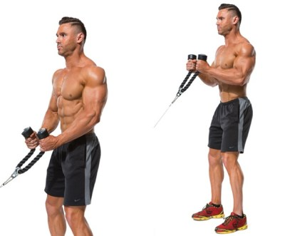 The Most Powerful Biceps Workout Plan - GymGuider.com