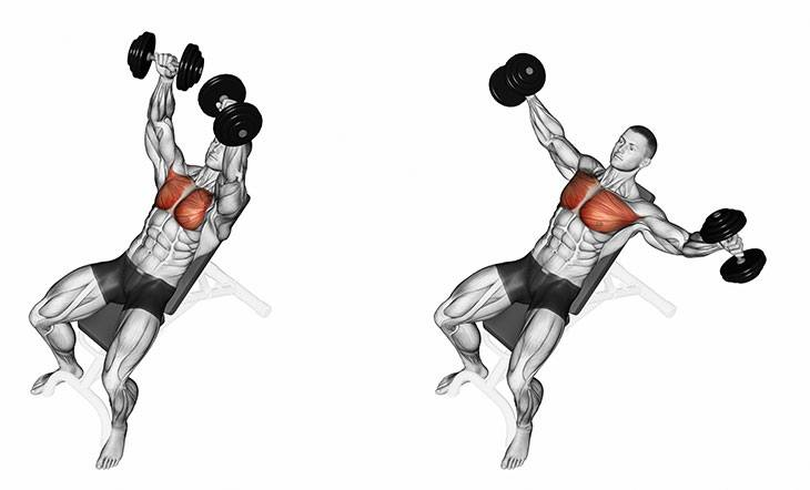 Chest Flat Dumbbell Fly Gymguidercom
