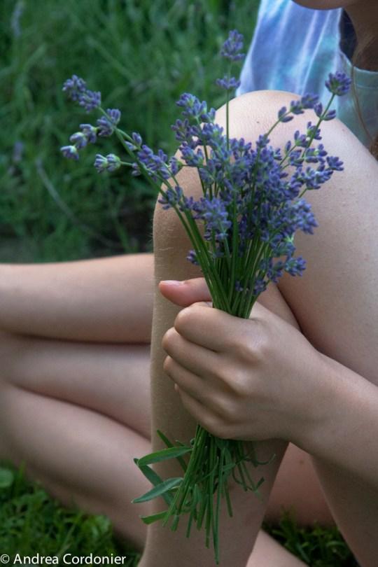 LavenderHarvest2012-1