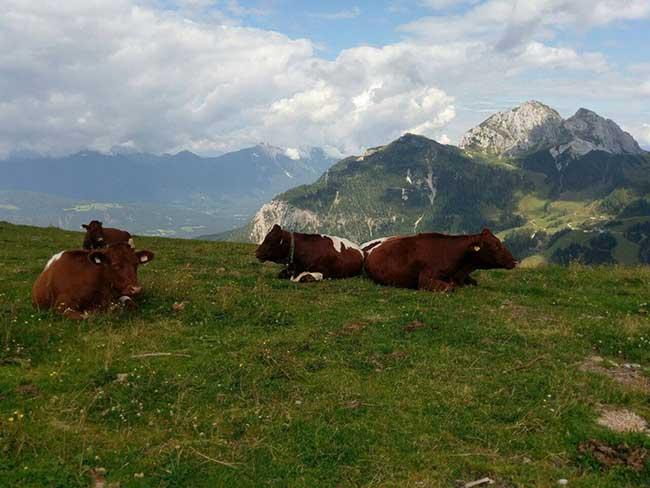 משפחת מאיר בחבל קרניתיה (אוסטריה) ובסלובניה