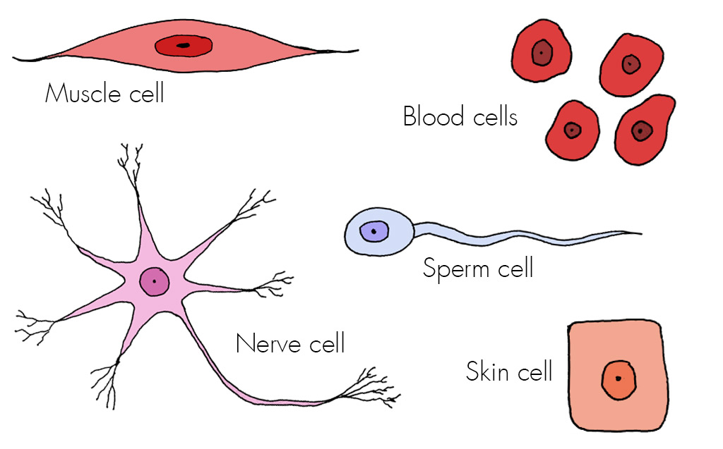 Cells - Haleo