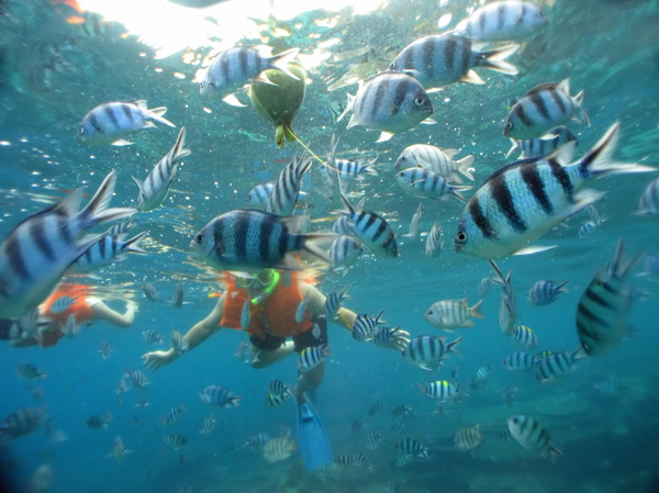 Salt water fish are beautiful, plentiful and friendly. In Hanauma Bay