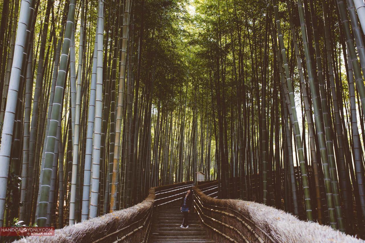 bamboo grove arashiyama kyoto japan