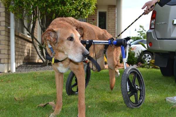 Dog Carts Dog Mobility Aid Handicapped Pets