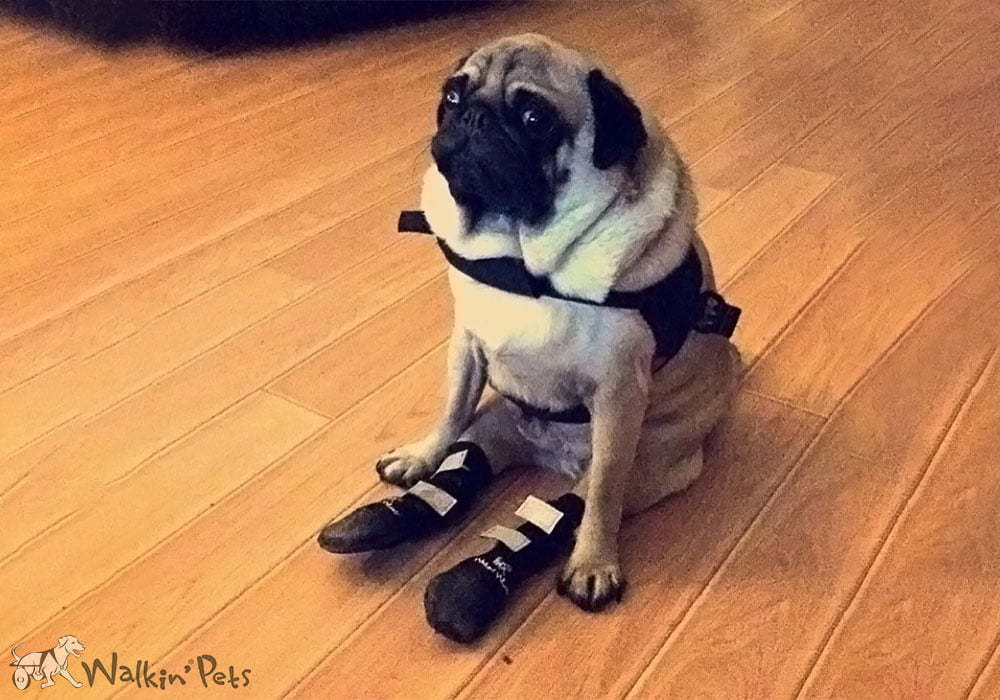 Dog Boots Walkin39 Pet Boots Dog Shoes Handicapped Pets