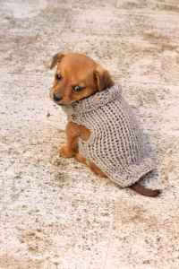 Free Knitting Pattern For A Puppy Sweater   Free Knitting ...