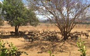 Taita Hills , Kenia