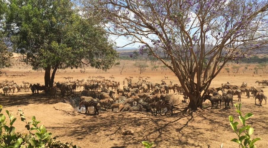 Safari Hatari – unter wilden Tieren in Kenia