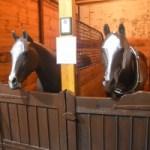 Horse Stall Replica  1914