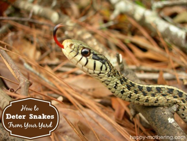 deter-snakes