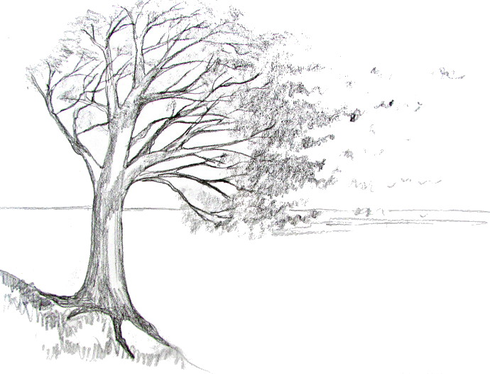 How To Draw A Tree -