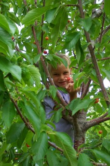 Louisa finds a great spot to read in the cherry tree!