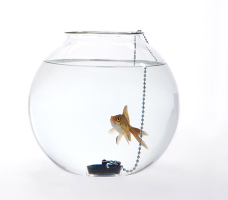 web-fishbowl-dont-piss-me-off
