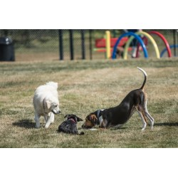 Small Crop Of Dog Play Bow