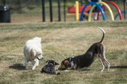 Small Of Dog Play Bow