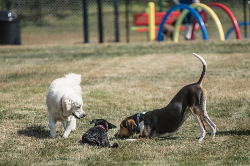 Large Of Dog Play Bow