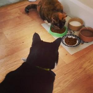 Cat Sitter Gosforth