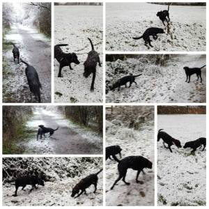 Snow Dogs in Newcastle