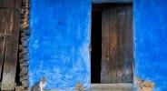 Courtyard Cat