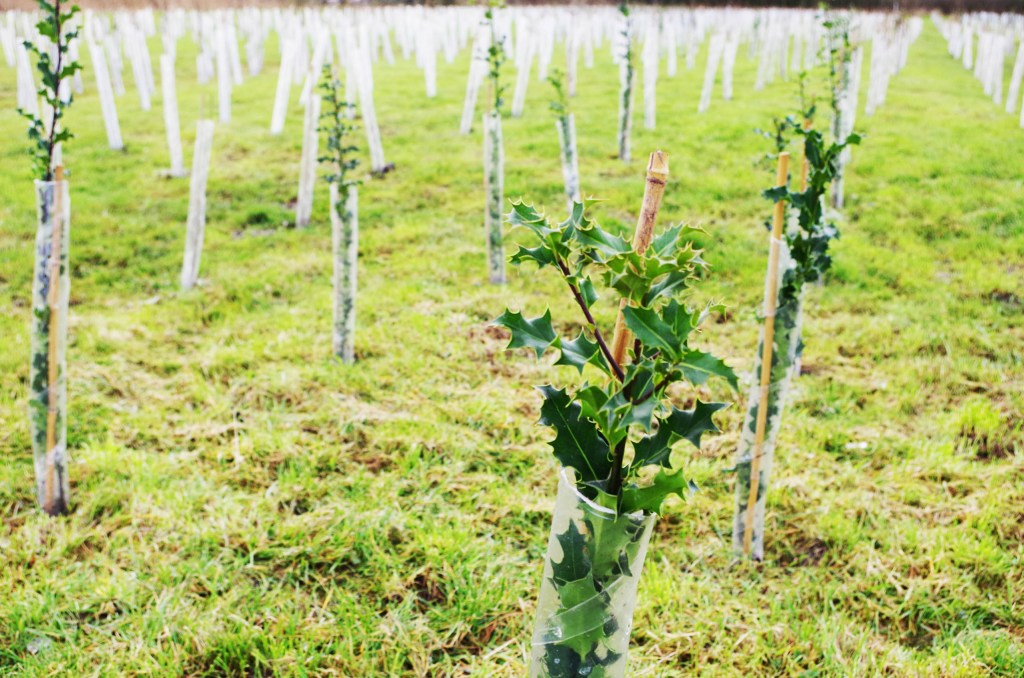Axbridge Chamber of Commerce News: The Stables Business Park at Rooksbridge has planted thousands of trees through a scheme by Hinkley Connection
