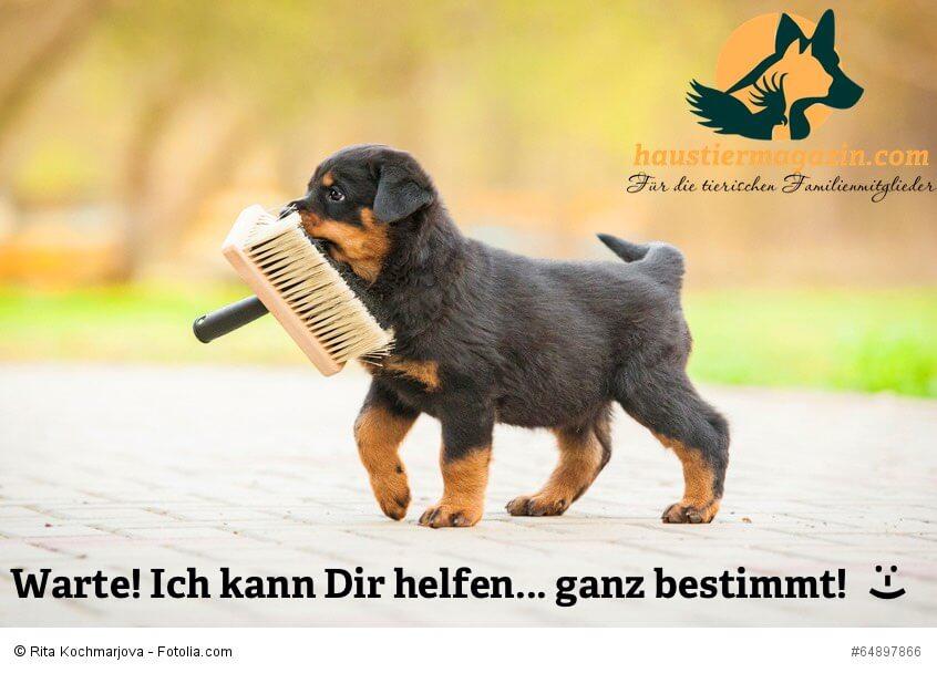 Sweet Baby Girl Wallpaper For Facebook Bildergalerie S 252 223 Er Tierbilder Bei Uns Im Haustiermagazin