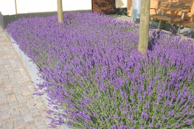 Havedesign til tørketålende have