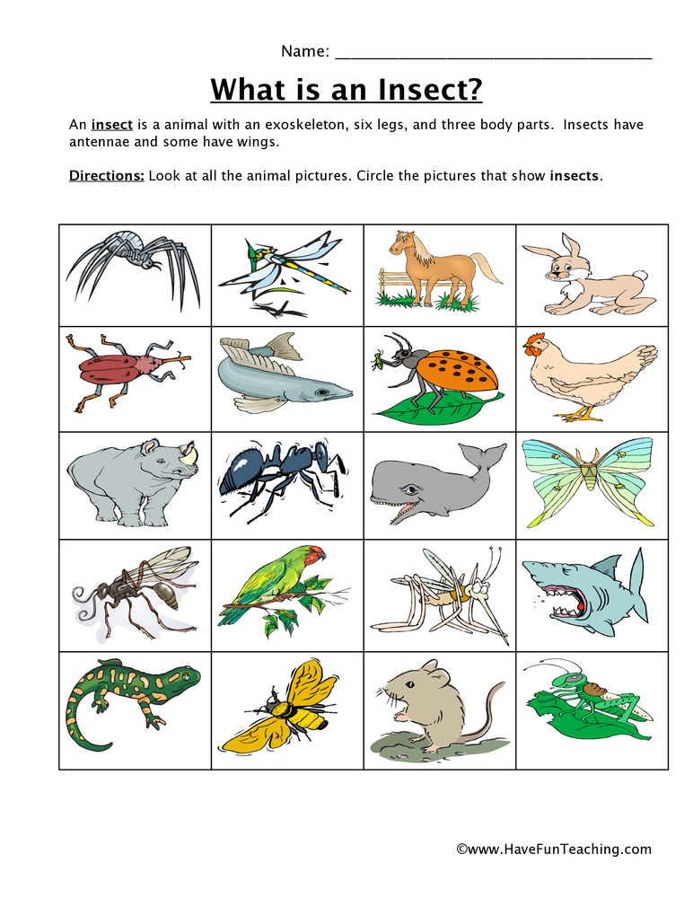Insect Classification Worksheet