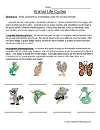 Life Cycle Worksheets | Have Fun Teaching