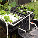 Aquaponics program preparing for D.C.