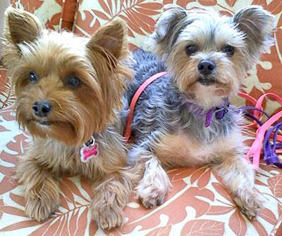 photo contest pet theme picture