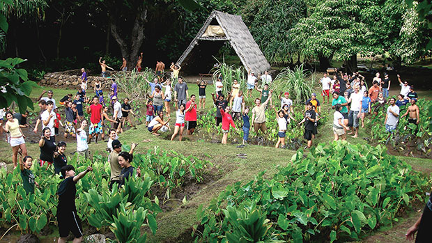 A group of people in a taro garden