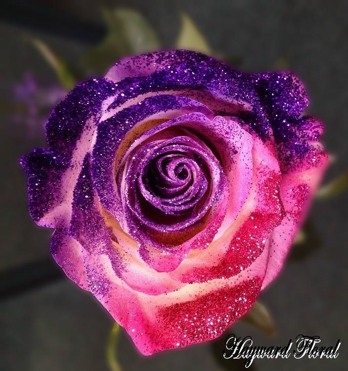 Fall Wooden Wallpaper Glitter Tip Roses 31