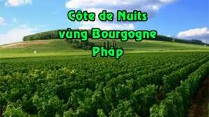ruou_Cote_de_Nuits_bourgogne