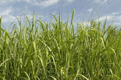 argumentative essay on ethanol