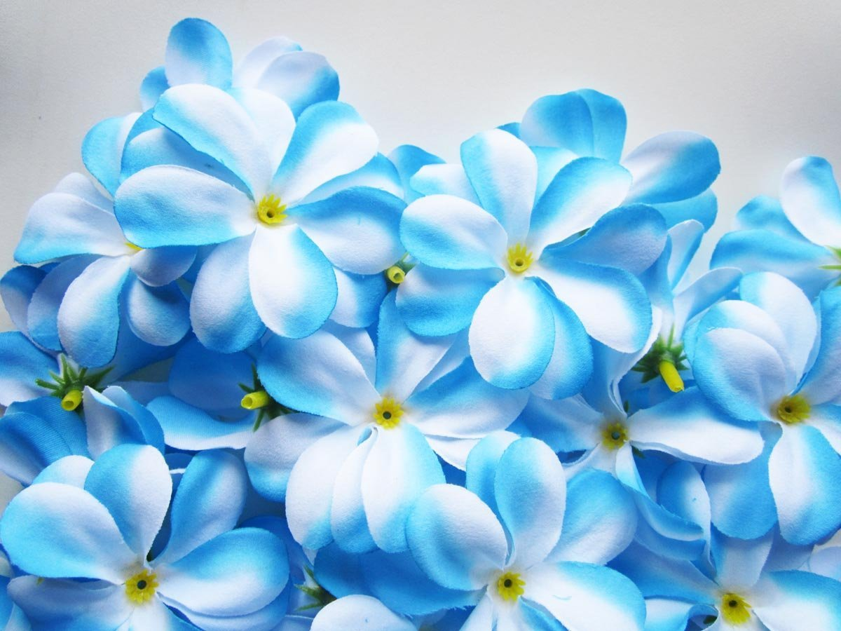 Www 3d Flower Wallpaper Com Blue Flowers Hd Wallpapers 30 Cool Hd Wallpaper
