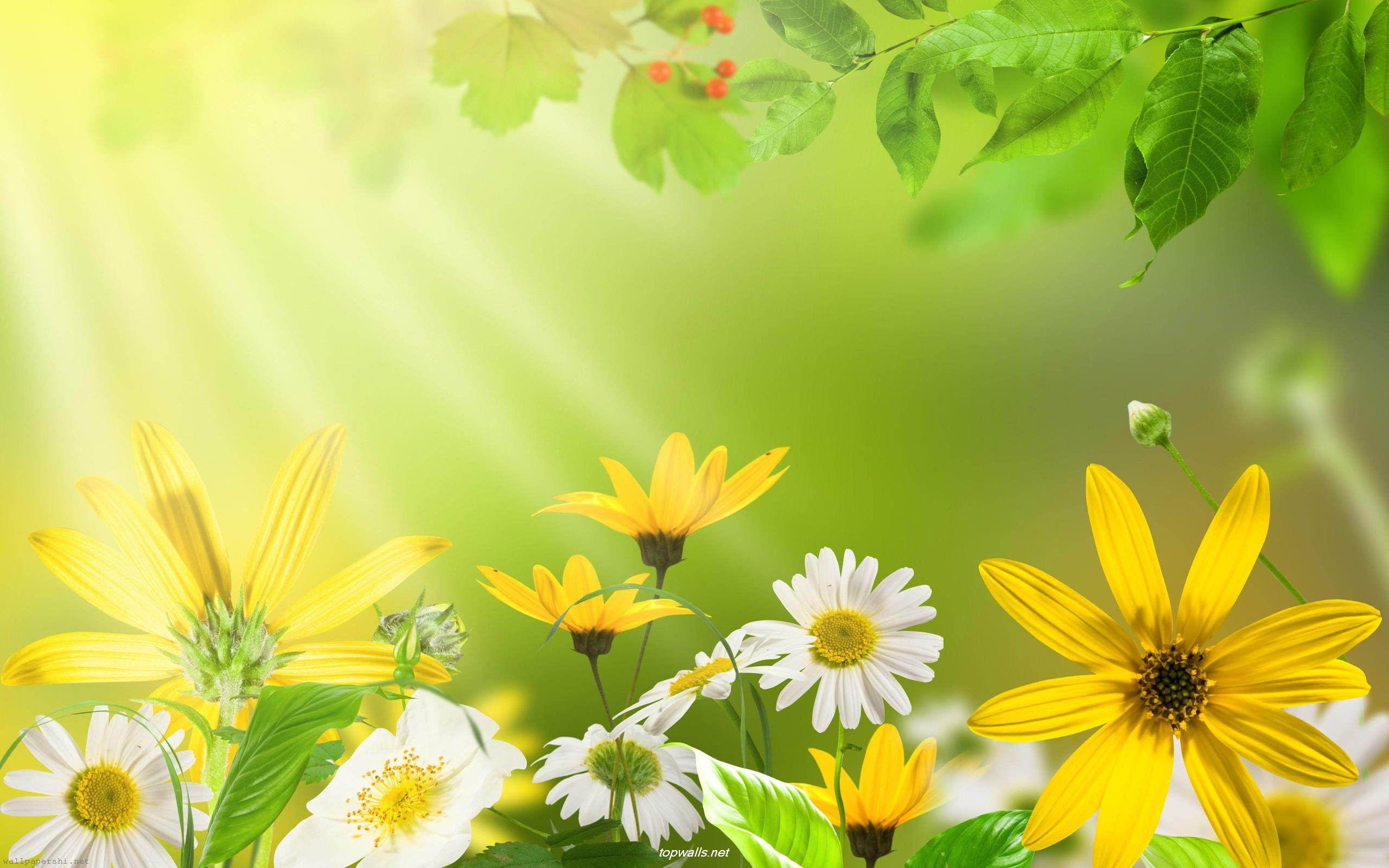 Www 3d Flower Wallpaper Com Green Flowers In Summer 12 Wide Wallpaper