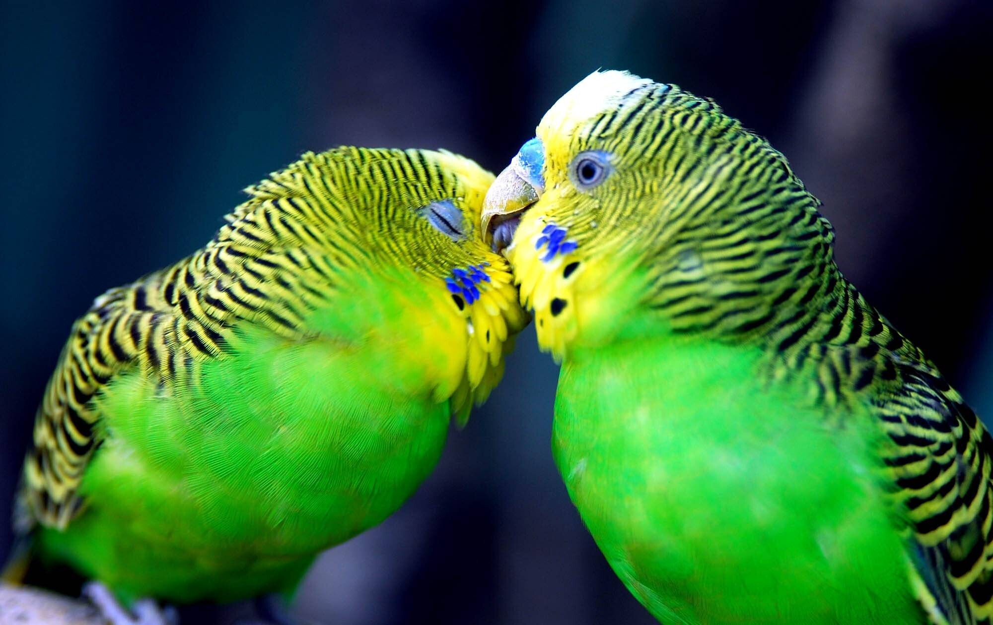 Download Sad Wallpapers With Beautiful Quotes Download Cute Parrots Kissing Romantic Fb Cover Facebook
