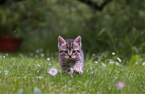 Summer Android Wallpaper Quotes Beautiful Kitten Walking On Green Grass Hd Pets Animal