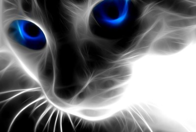 3D Abstract Cat Animals – HD Wallpapers , HD Backgrounds,Tumblr Backgrounds, Images, Pictures