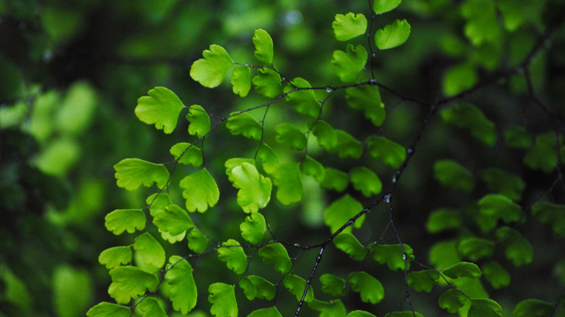 3d Call Of Duty 2 Wallpaper High Definition Green Leaves Wallpapers