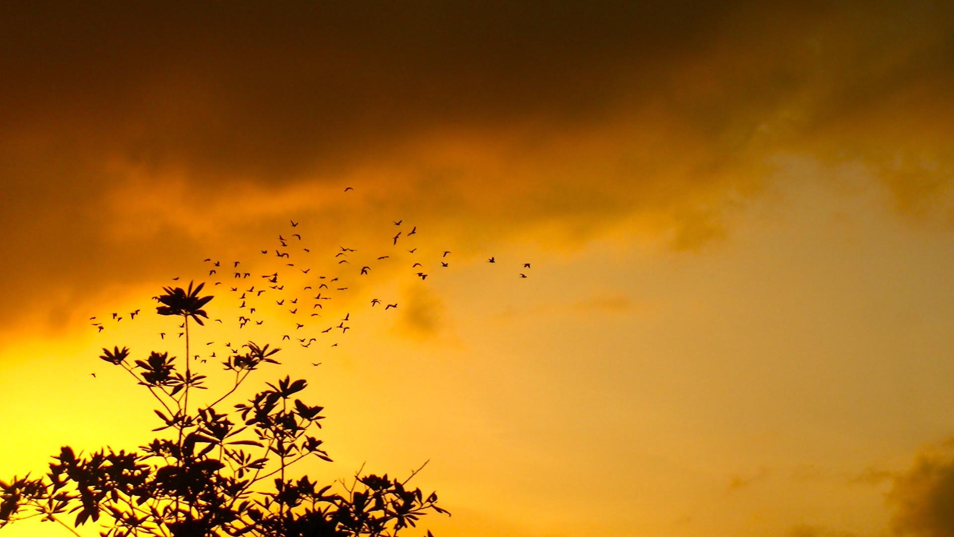 Islamic Quotes In Tamil Wallpapers Beautiful Nature Sunset And Birds Figure Background Hd