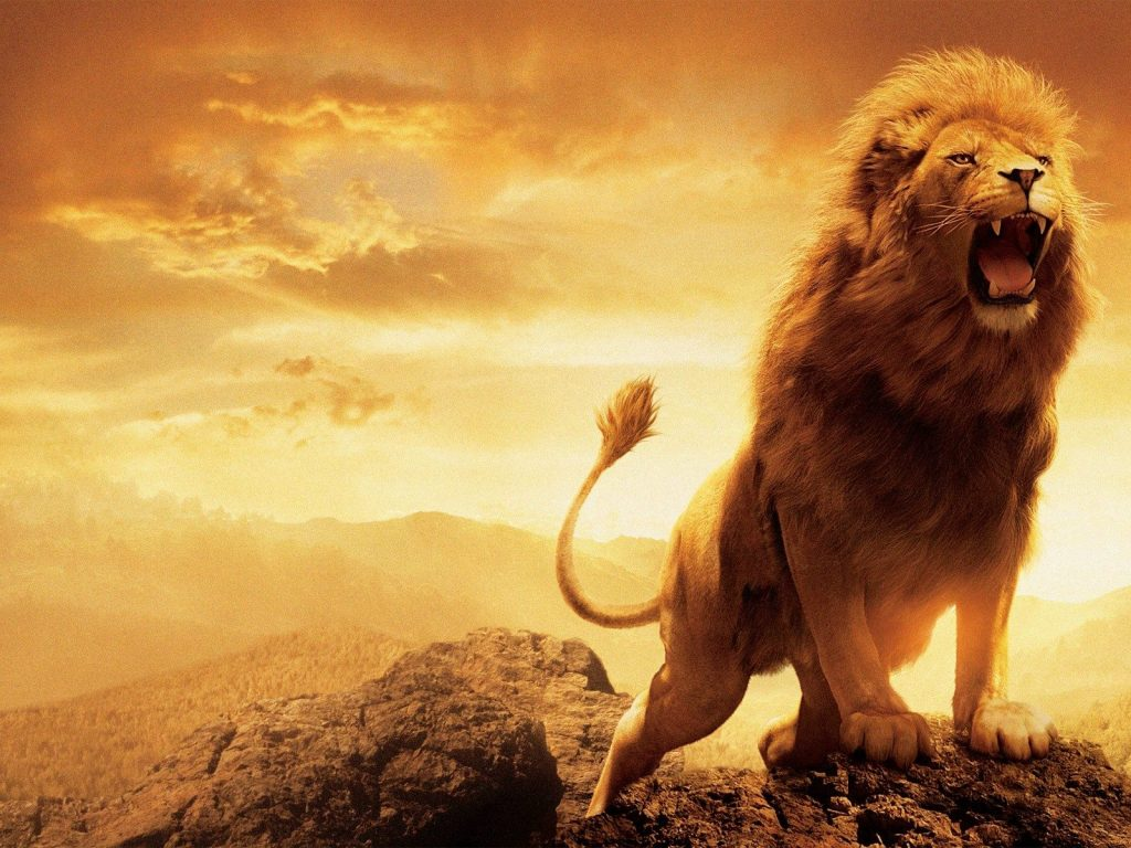 Islamic Quotes Wallpapers Iphone Hd Lion Wallpapers Widescreen 1920 215 1200 Hd Wallpapers