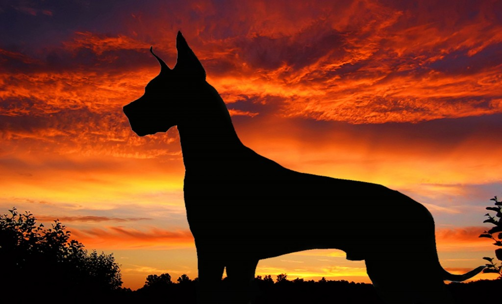 Beautiful 3d Wallpaper For Android Great Dane Wallpapers Pictures Images