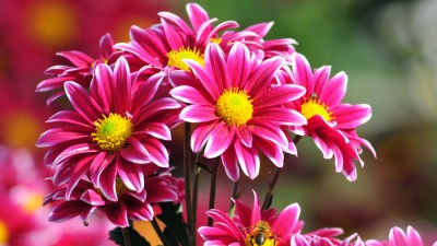 Beautiful Flowers Wallpapers, Pictures, Images