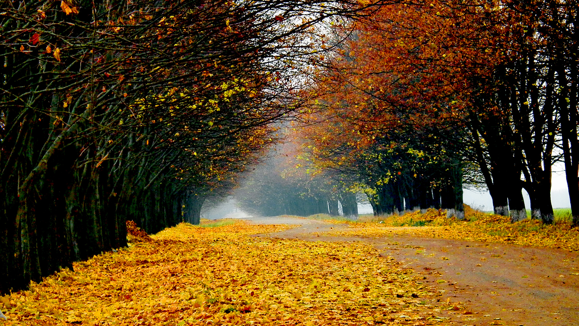 Gloomy Fall Wallpaper Autumn Scenery Wallpapers Pictures Images