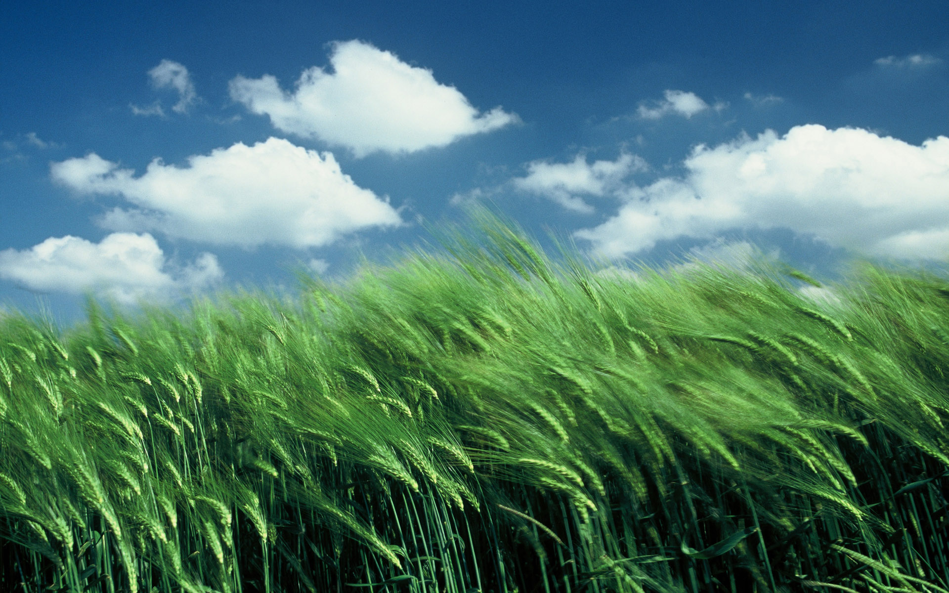 Wallpaper Hp 3d Cornfield Wallpapers Pictures Images