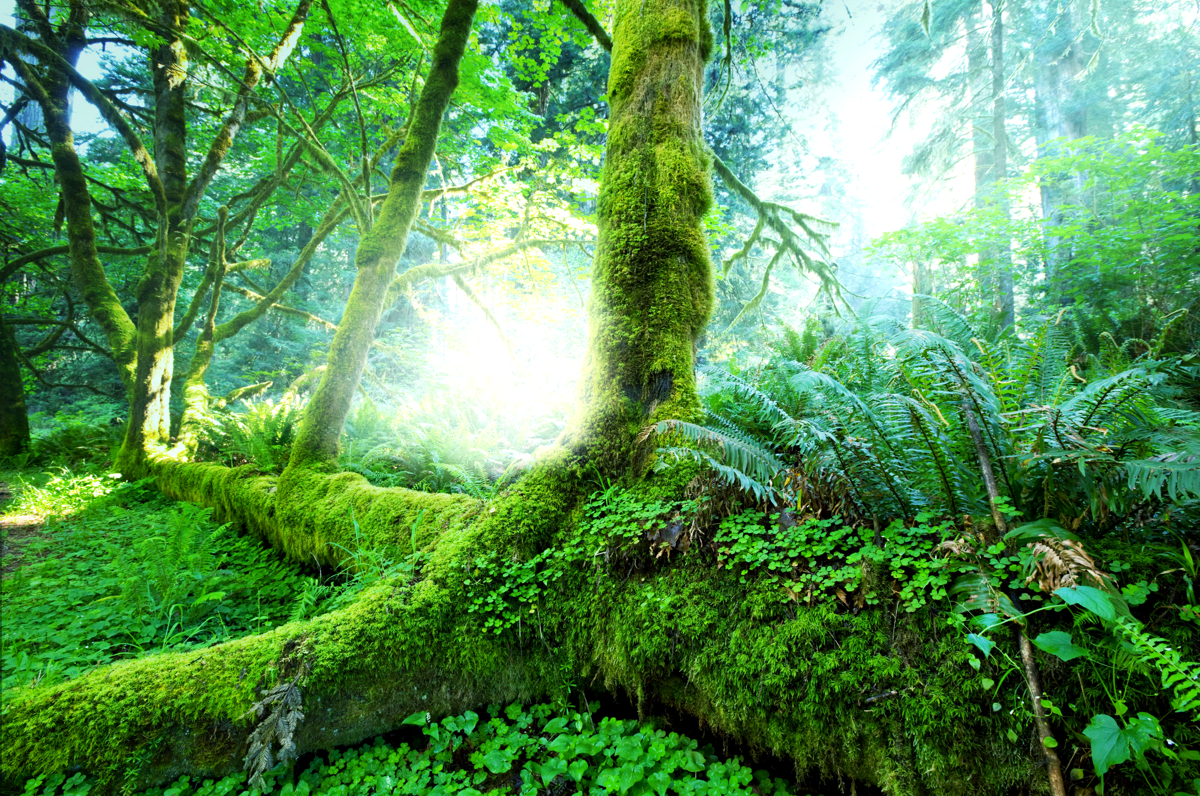 Forest Iphone Wallpaper Jungle Wallpapers Pictures Images